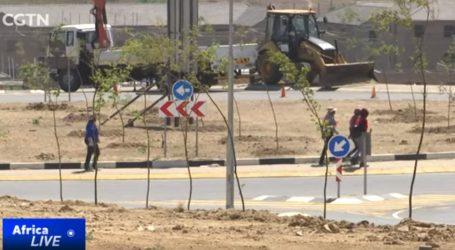 VIDEO: Johannesburg se pošumljavanjem bori protiv klimatskih promjena