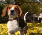 VIDEO: Poznati dali podršku organizaciji Last Chance for Animals (LCA)