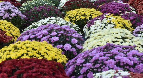 Nastavljen trend rasta uvoza cvijeća u Hrvatsku