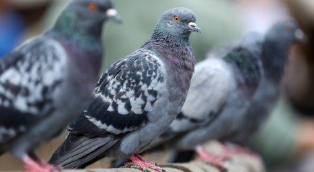 VIDEO: Gdje su odletjeli golubovi pušteni na trgu Tian'anmen?