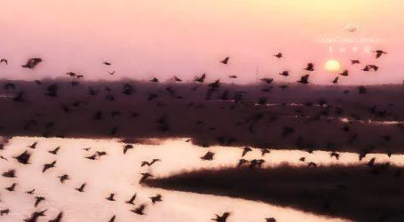 VIDEO: Crvenokapi ždral gubi svoja staništa