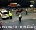 VIDEO: Konj lutao ulicama azijskog grada