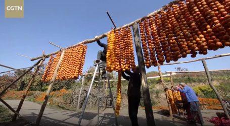 VIDEO: Tradicija sušenja voća persimone