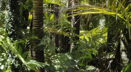 Naglo poraslo krčenje Amazonije