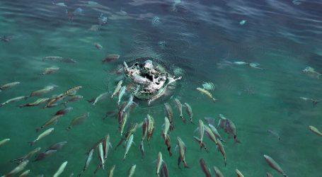 ISTRAŽIVANJE: S porastom temperature u oceanima nestaje kisika