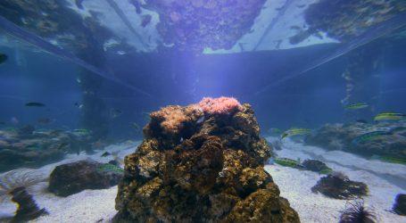VIDEO: Odgovor na problem izbjeljivanja koraljnih grebena