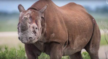 VIDEO: Britanska vojska sudjelovala u migraciji nosoroga