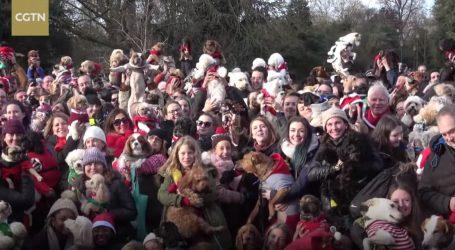 VIDEO: Pokušaj obaranja slatkog adventskog rekorda