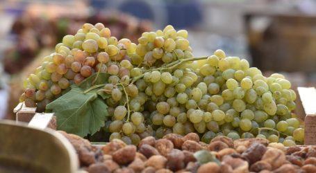 TRADICIJA Španjolci u Novu godinu ušli jedući grožđe
