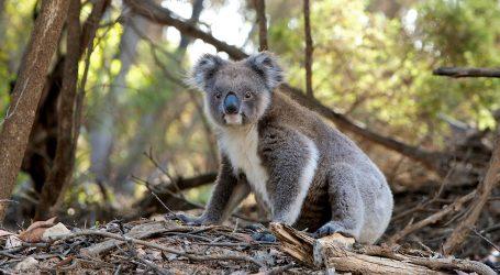Stotine milijuna životinja stradale u australskim požarima