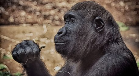 Deseci majmuna uginuli u požaru u zoološkom vrtu u Njemačkoj