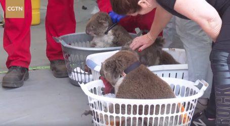 VIDEO: Hitne veterinarske stanice na Otoku klokana