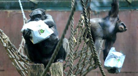 VIDEO: Gozba za životinje u prirodnom rezervatu