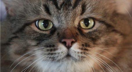 Gola crna pička maca