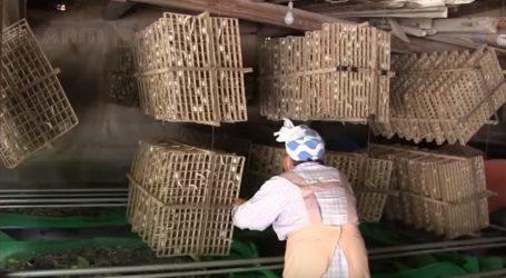VIDEO: Tradicionalna japanska proizvodnja svile
