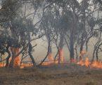 Požarima pogođeno 75 posto Australaca