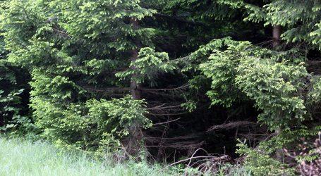 Međunarodni dan šuma upozorio na očuvanje prirodnog bogatstva