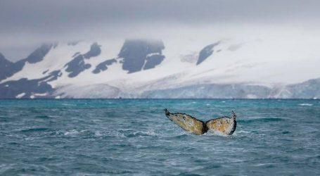 Greenpeace ponovno upozorio na važnost zaštite ekosustava
