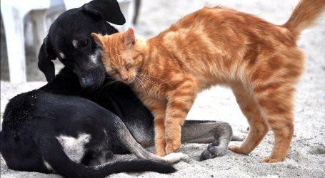 Udruge za zaštitu životinja: Psi i mačke ne mogu oboljeti od koronavirusa, ne napuštajte ih