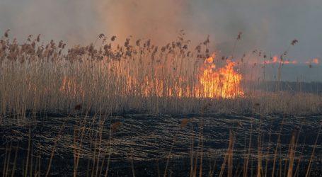 """""""Ovo je tragedija, nemoguće je zbrojiti gubitke"""" – najvećim poljskim nacionalnim parkom haraju požari"""