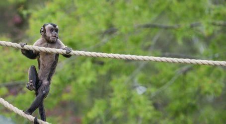 Sutra se otvara zagrebački Zoološki vrt