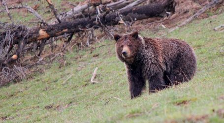 Pritisak za otvaranje američkih nacionalih parkova