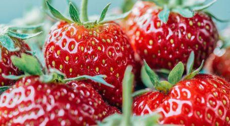 Vrgoračke jagode stižu na hrvatske tržnice