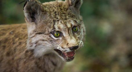 Zoološki vrtovi u problemima zbog pandemije