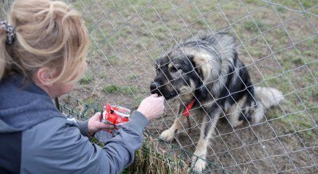 Uprkos karanteni životinje u skloništima dobivaju istu brigu kao i prije