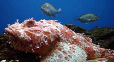 Brojne vrste velikih riba vole interakciju s ljudima