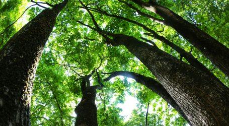 Privatni parkovi prirode u Brazilu su dobro rješenje za zaštitu prašume