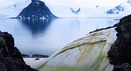 Zelene alge su važne za ekosustav Antarktičkog poluotoka i sve ih je više