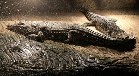 Aligatori iz američkog parka prirode St. Vincent