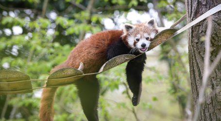 Posjetimo velike zoološke vrtove u San Diegu i Memphisu