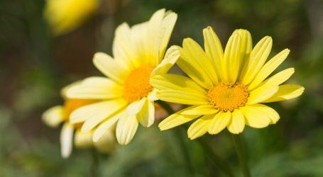 Englesko mjesto Pebworth ponosno na svoje vrtove