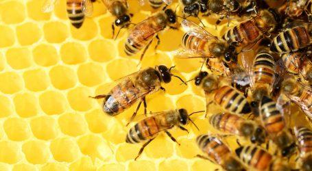 PROGRAM U ZAGREBAČKOM ZOO-U: Obilježava se Svjetski dan pčela