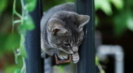 Mačka u Francuskoj se u potpunosti oporavila od koronavirusa