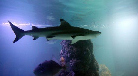 Morski psi su važan dio ekosustava koraljnih grebena na Fidžiju