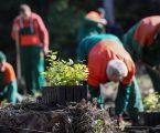 Velegradovi sve više brinu o ekologiji i pošumljavanju