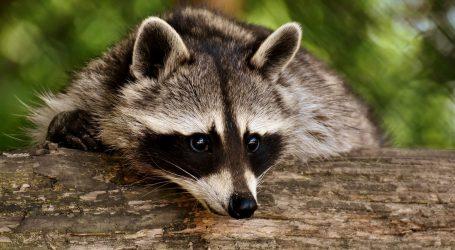 Životinje zooloških vrtova 'usamljene' bez posjetitelja