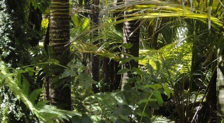 Novi virus mogao bi stići iz Amazonije