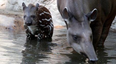 Zoološki vrt u Budimpešti otvorio vrata