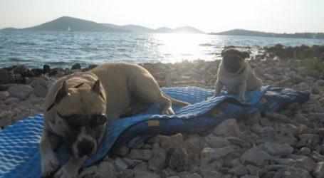 LJUBIMCI I MORE: Ne ostavljajte ih, donosimo vam savjete kako najlakše organizirati ljeto sa psom