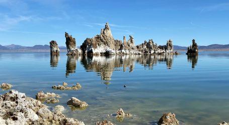 Mnoge vrste ptica obitavaju na slanom jezeru Mono
