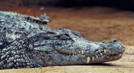Otkriveni fosilni tragovi drevnog krokodila koji se kretao na stražnjim nogama