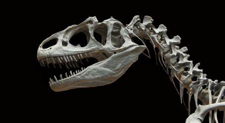 OTKRIĆE: U Argentini pronađeni ostaci krilatog dinosaura mesoždera
