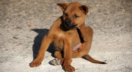 KUĆNI LJUBIMCI: Kako prepoznati da pas ili mačka ima buhe i kako ih se najbolje riješiti