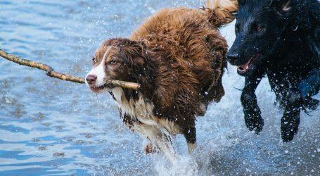 Donosimo deset najpoznatijih znakova koji ukazuju na to da je vaš pas sretan i zadovoljan
