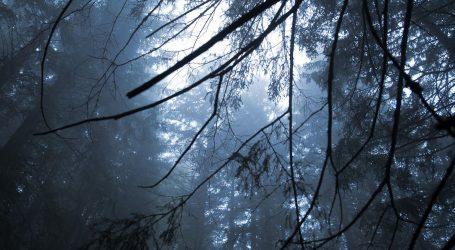 IZLOŽBA: Art-Eko – šuma kao trajna inspiracija