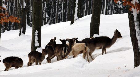 Malo zimskog ugođaja iz regije Altaj